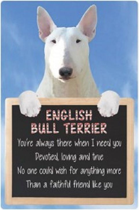 English Bull Terrier (white)  3D home hang up sign